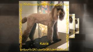 Pet Grooming in Santa Rosa, CA | 707-331-3143