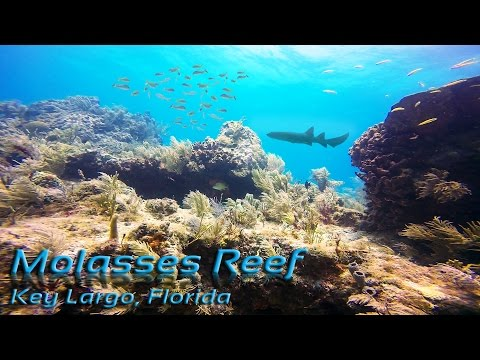Molasses Reef Key Largo Scuba Diving