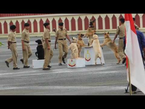 1st time in the world BSF Dog Stunts {Border Security Force Dog}