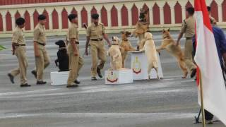 amazing Demonstration by BSF Dog's 軍隊狗展 军队狗展 leger hondensh...