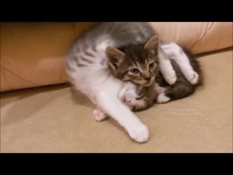 Silly and Super Cute Cats Compilation #1   Cat's Cutest Moments Video