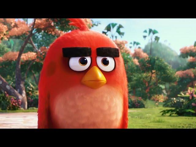 ANGRY BIRDS - Tráiler oficial en español HD
