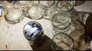 Рыбные консервы в домашних условиях. Пальчики оближешь! Тушёнка часть 3