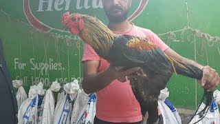 Hyderabad Sunday Pet Market