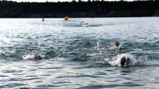 smart Frankfurt City Triathlon powered by Gesundheit 2013 - Offizielles Racevideo