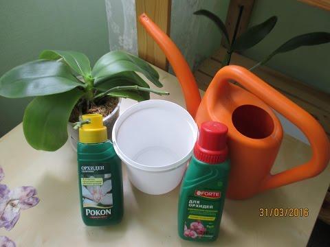 Как я осуществляю полив орхидей и их удобрение