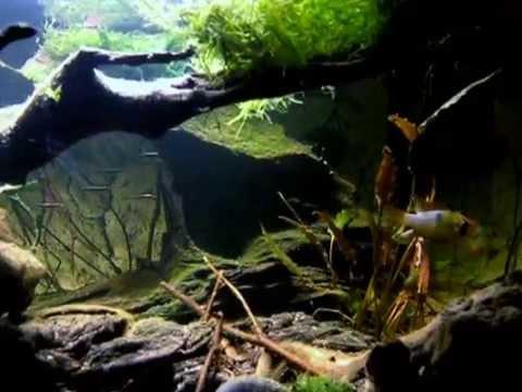 South American Biotope Aquarium Youtube