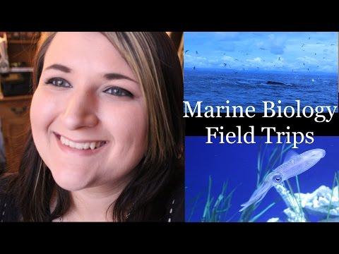 Marine Biology Field Trips!