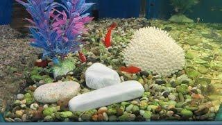 Как чистить искусственные аквариумные растения!