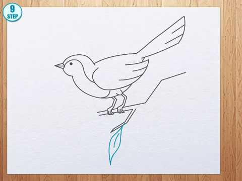 Kuş Nasıl çizilir Youtube