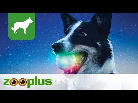 Hundespielzeug   Leuchtender