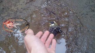 Спасение птенца синицы! (Рыбалка с Денчиком)