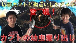昆虫採集☆カブトムシ☆クワガタムシ カブトムシの幼虫掘り出し!】(くろ...
