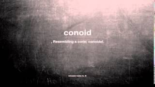 What does conoid mean