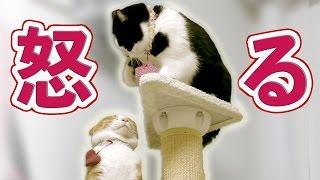 チャンネル登録 ↓ 2匹の猫通信(Cats Life TV) https://www.youtube.com/...