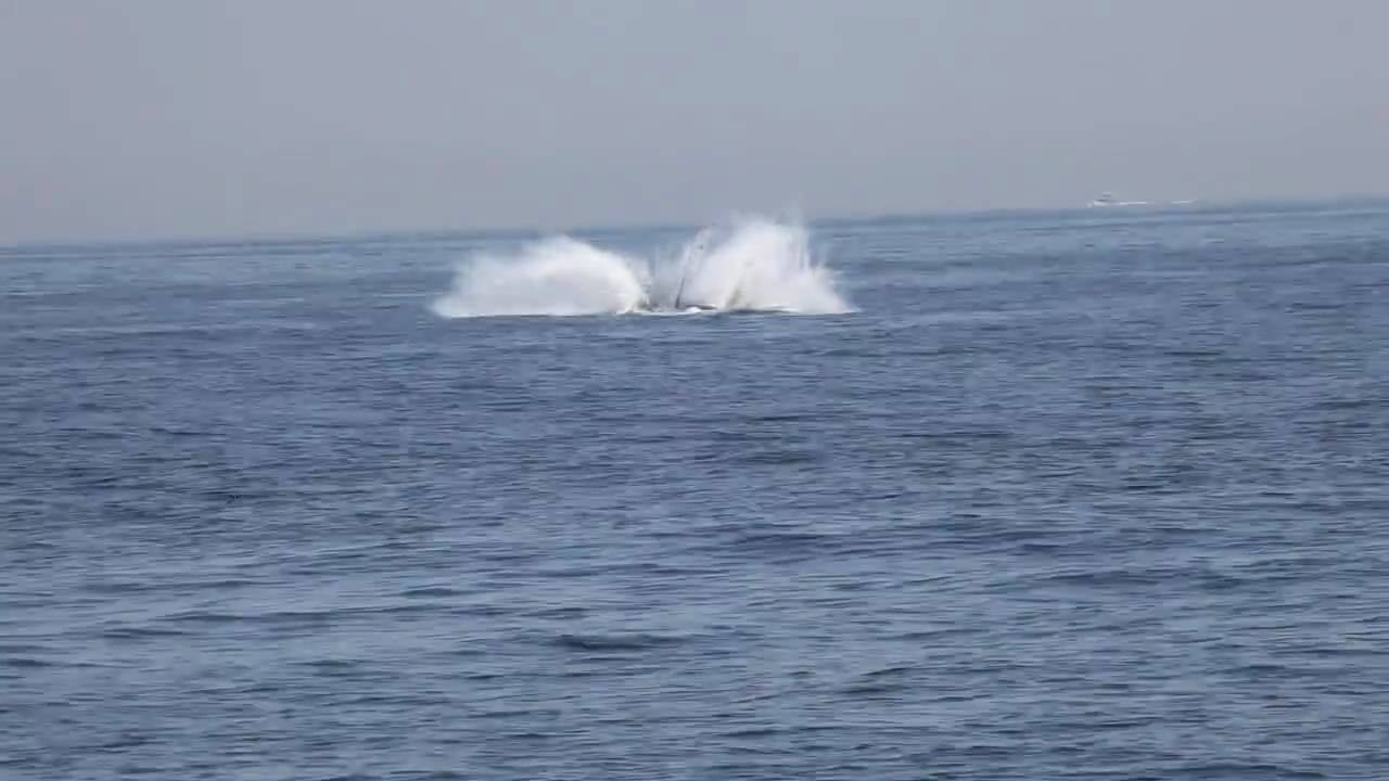 Jersey Shore Whale Plays For Spectators Off Point Pleasant Beach Nj Youtube