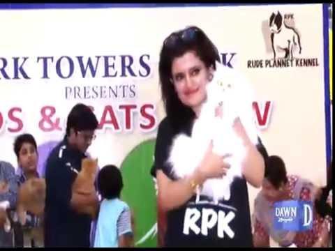 Cat show in Karachi