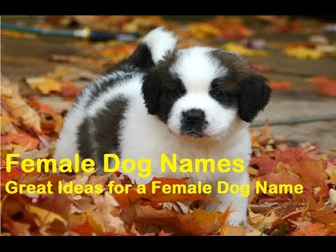 40+ Popular Female Dog Names