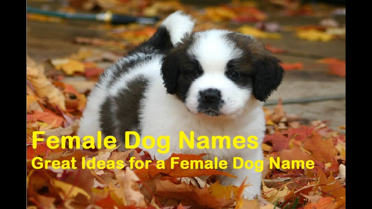 H Dog Names 40+ Popular Fem...