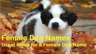 40+ Popular Female Dog Names