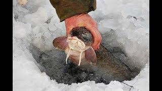 Как ловить налима зимой: снасти, наживка, ночная ловля!