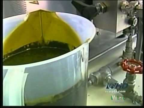 Next Big Bio Fuel   ALGAE   YouTube