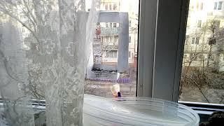Синички самодельная кормушка для птиц на окне