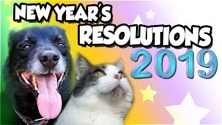 New Year's Resolutions 2019 with Dog and Cats !