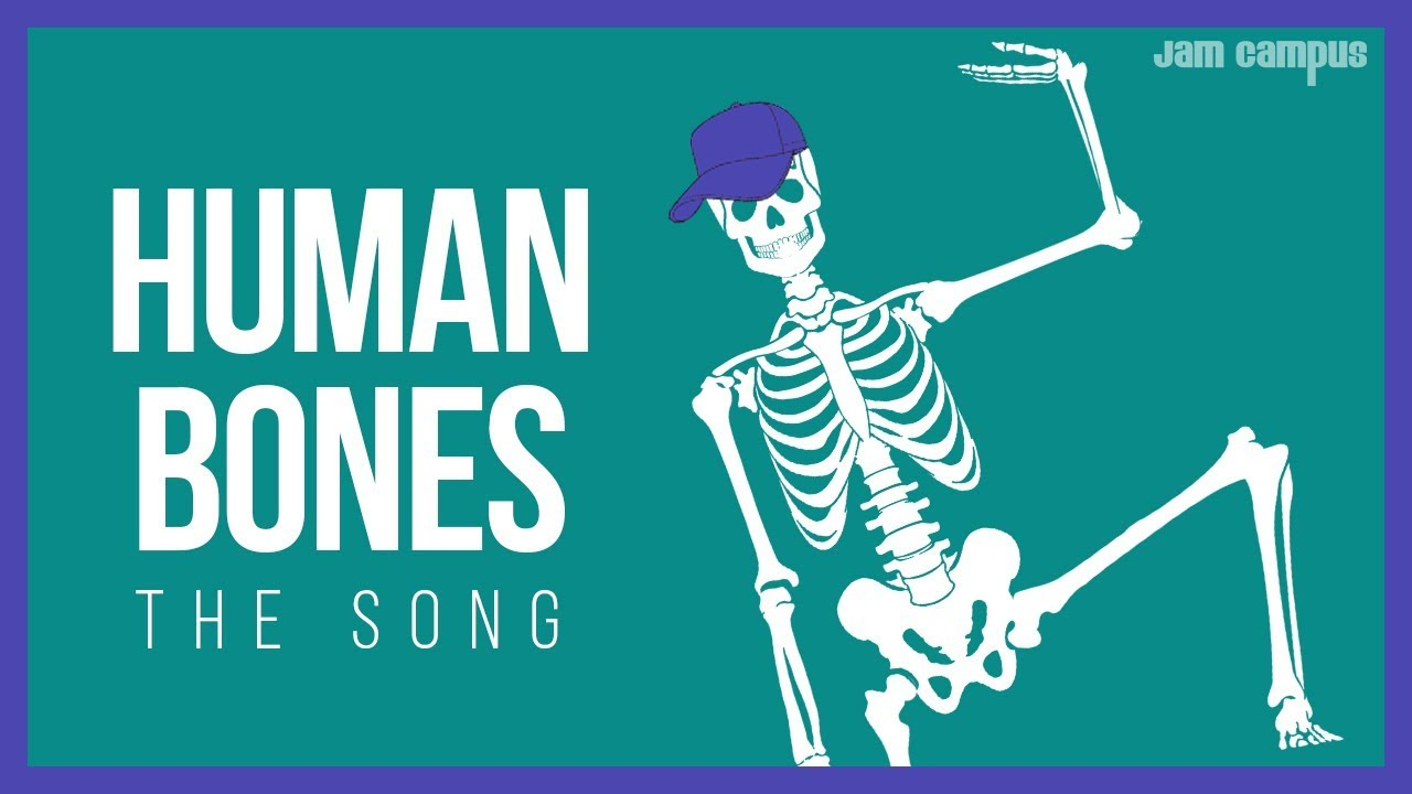 The Human Bones Song Science Music Video Youtube