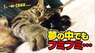 二兎追うものは二兎を得るのが猫さんのようです 【チャンネル登録お願い...