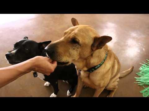 Shelter Squad - Humane Society of El Paso