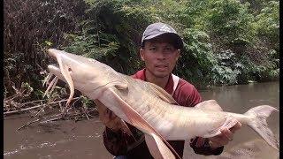 EP.24 ตามช่วยปลากดยักษ์ ในเขตอนุรักษ์กำลังน๊อคน้ำ