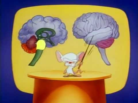 Pinky And The Brain - S01E03 [Part 3/3] [Brainstem]
