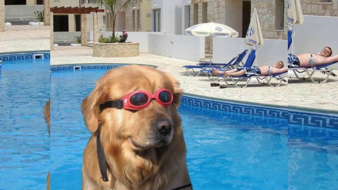 Watch Dogs  Googles