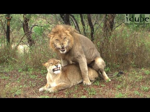 BEST ANIMALS OF 2018 Pt. 2 | Funny Pet Videos from YouTube · Duration:  1 hour 20 minutes 8 seconds