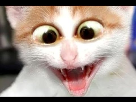 50 Funniest Scared Cats In The World 2017 - Best Funny ... Funny Cat Videos Episodes