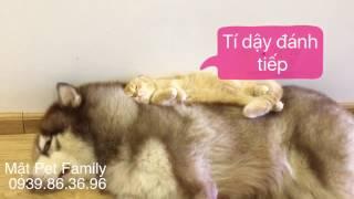 Mât vs Mon đánh nhau , bị chủ phạt - Mật Pet Family