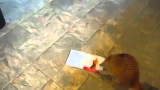 нервному коту не нравится музыкальная открытка