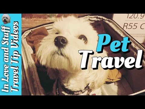 Traveling To Europe With A Pet | Travel Tip