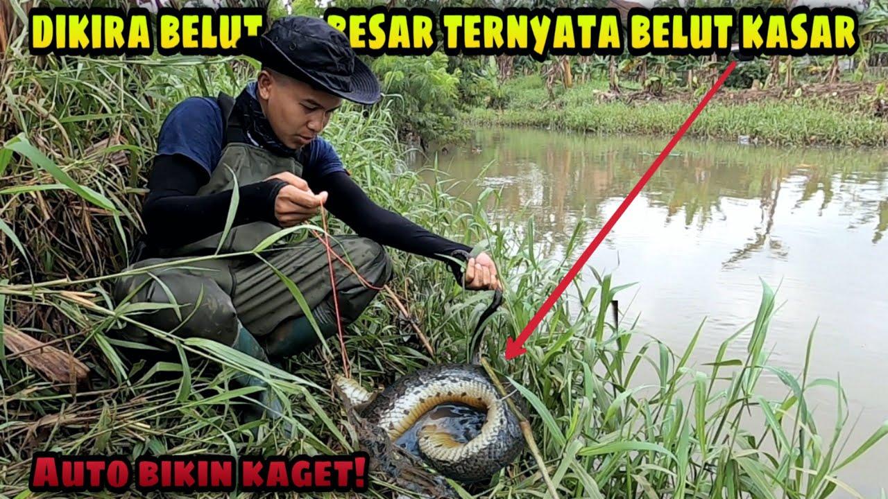 Niat Mancing Belut Rawa malah Dapat Anaconda Jawa | Eel Fishing