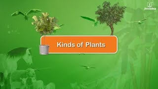 Types of Plants | Science For Kids | Periwinkle