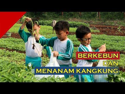 Berkebun dan Menanam Kangkung - TK Al Bayan Islamic School 2018