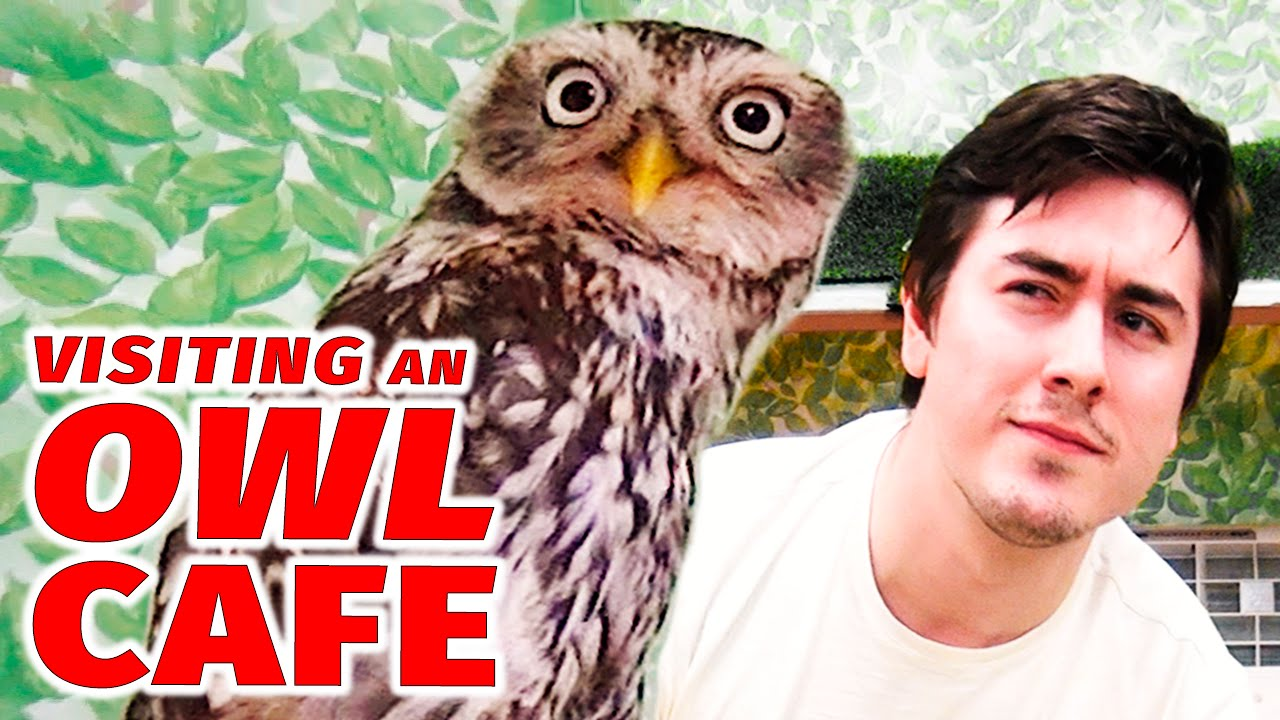 Visiting an Owl Cafe in Japan