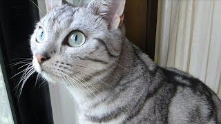 あめちゃんが窓の外にセミを発見して母ちゃんを呼びに来ました。母ちゃ...