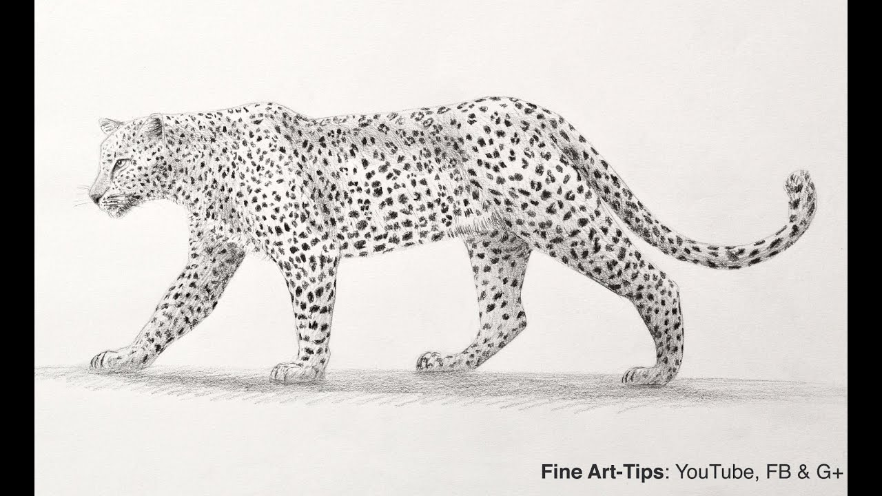 How To Draw A Leopard With Pencil Big Cat Youtube