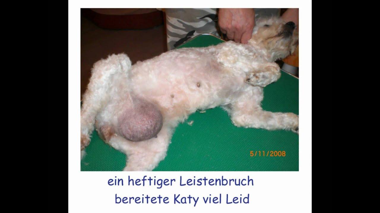 Katy ist einer der Hunde aus dem Tierheim Györ in Ungarn