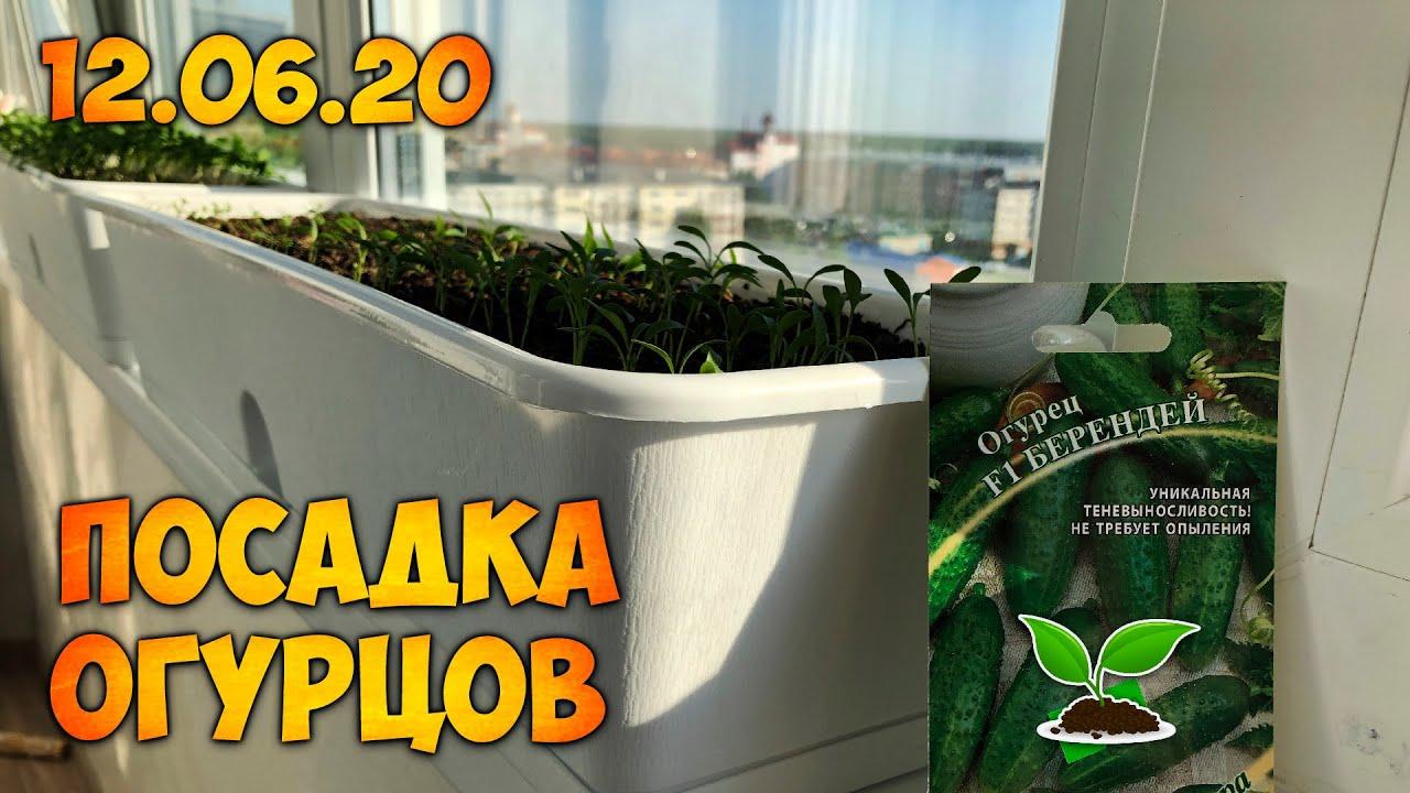 Как Посадить Огурцы Семенами | Огород В Домашних Условиях
