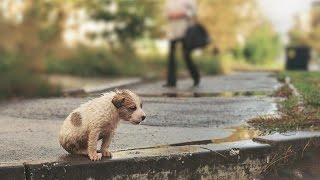 Социальная реклама о спасении животных/Social advertising about saving animals