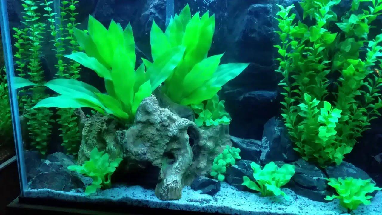 Artificial plants on 55 gallon aquarium