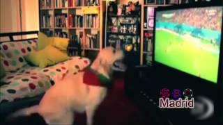 شاهد فرحت هذا الكلب بعد ما احرز كرستيانو هداف في كاس العالم 2014
